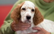 Pet Therapy for Rheumatoid Arthritis