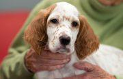 Pet Therapy for Rheumatoid Arthritis