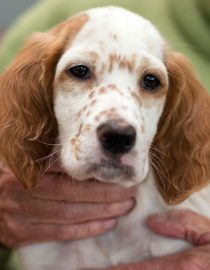 Pet Therapy for Rheumatoid Arthritis: Who Rescued Who?